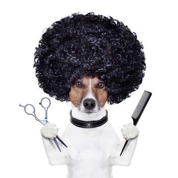 barber student or barber customer?