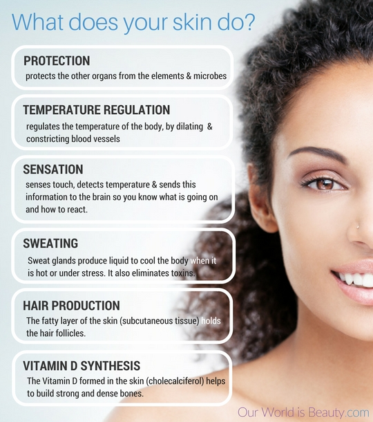 The functions of your skin
